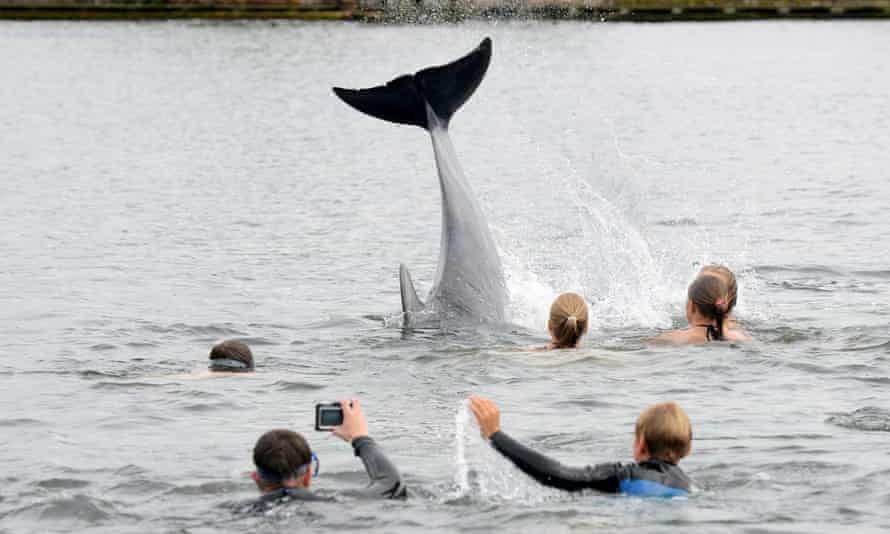 A swimmer takes a picture of the dolphin near Kiel