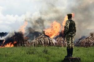Kenya Wildlife Services (KWS) rangers stand guard around illegal stockpiles of burning elephant tusks, ivory figurines and rhinoceros horns