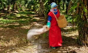 A worker scatters fertiliser on an oil palm plantation in Malaysia