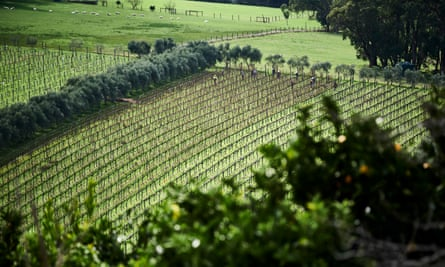 The vines at Montalto