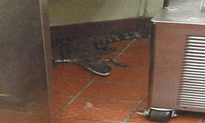 Florida wildlife officials say that a 3.5-foot alligator was thrown through a Wendy's drive-thru window. Joshua James has been charged with assault with a deadly weapon.