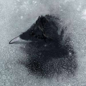 Bird #9