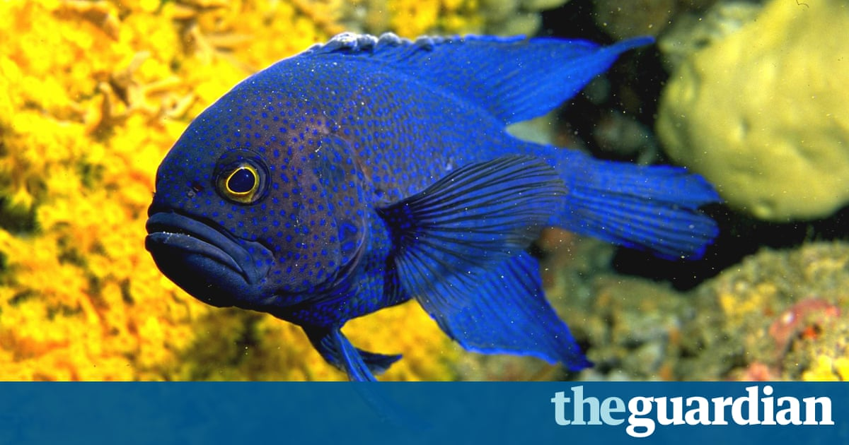 Destruction of kelp forests by tropical fish shows impact for Tropical fish temperature