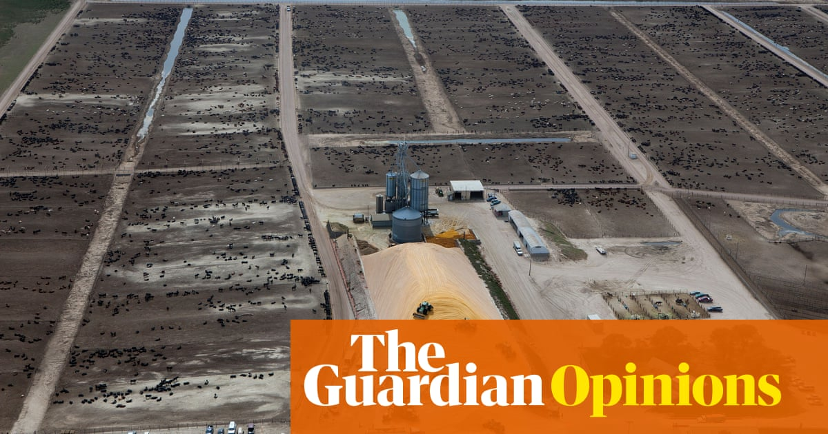 To fight the climate crisis, banks must stop financing factory farming