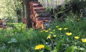 Stacked alder logs