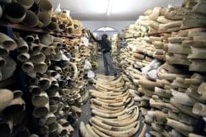 Zimbabwe ivory stockpile