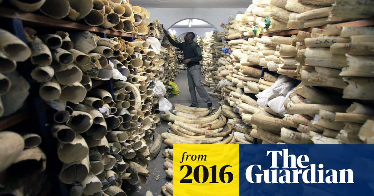 433b79ad3 Legal ivory sale drove dramatic increase in elephant poaching