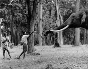Man and male 'tusker' elephant