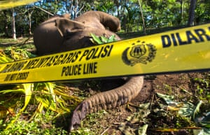 Of these, >90% have been prosecuted. For Sumatran elephants, the WCU has provided information to law enforcement agencies to follow up on their reports of 25 ivory trading cases, of which 11 have occurred since 2012.