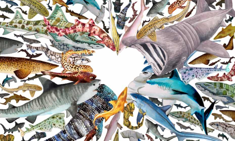 Illustration of sharks