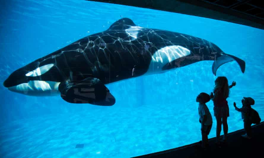 Young children get a close-up view of an Orca killer whale during a visit to the animal theme park SeaWorld in San Diego, California on 19 March 2014.