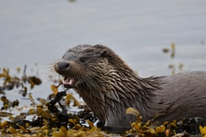 Otter by Sam Llewellyn