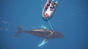 Aerial view of researchers attaching a whale cam in Wilhelmina Bay