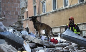 A dog inspects a collapsed building during a search and rescue operation in Amatrice