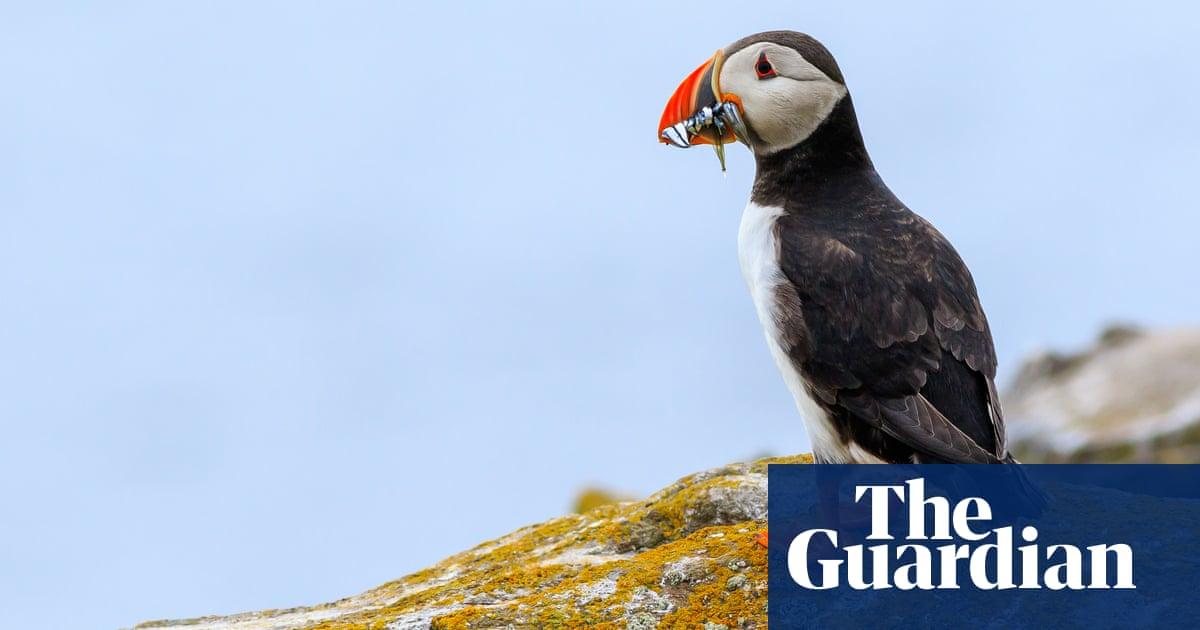 Seabirds nest in new spots on Farne Islands as Covid keeps people away