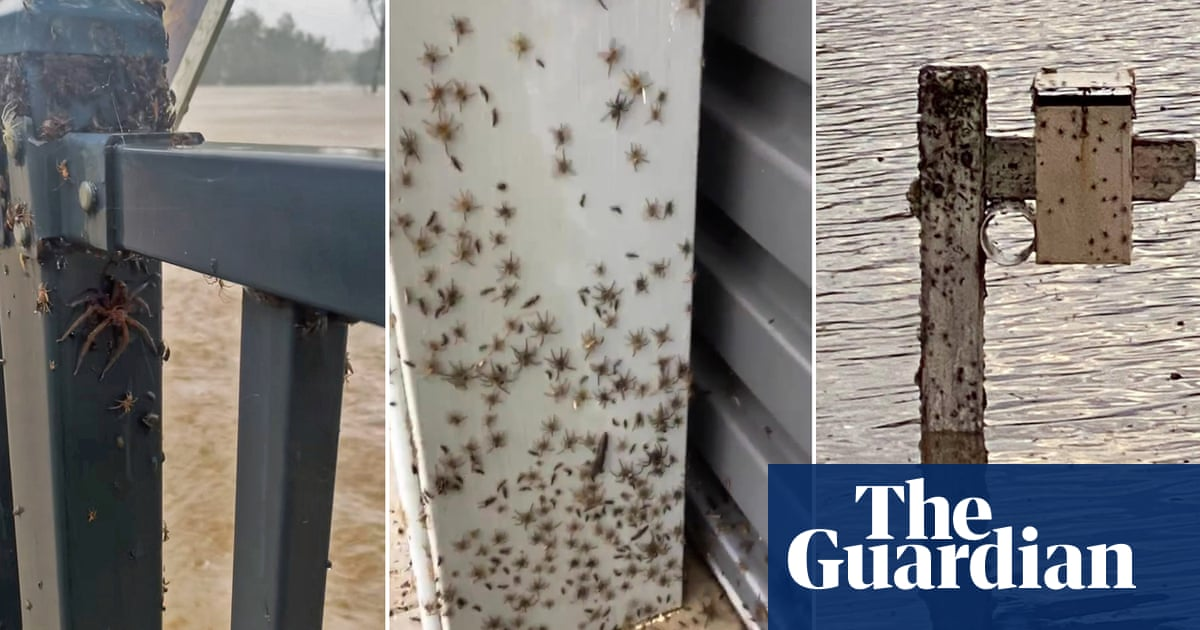 'Look at them all!' Spiders escape to higher ground during NSW floods – video – The Guardian