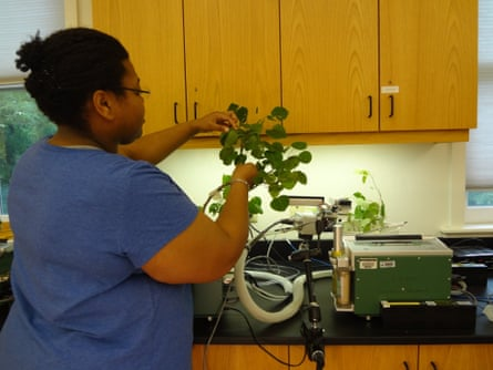 Angelica Patterson studies her samples