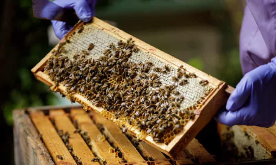 Anne Rowberry, chair of the British Beekeepers Association, with some of her bees.