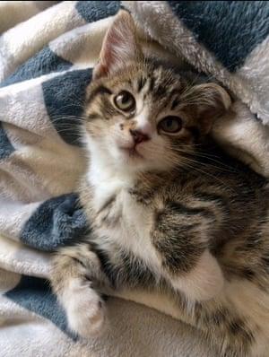 Freddie the kitten.