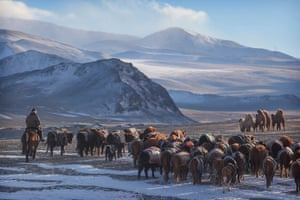 The group made the trip with three 4x4 vehicles, a six-wheeler overland truck and eight full-size gers (Mongolian yurts) to accommodate everyone. The animals are still moved by foot