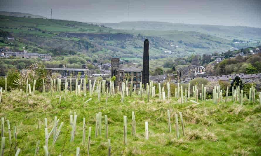 Saplings at Marsden, near Huddersfield, planted as part of the Northern Forest initiative.