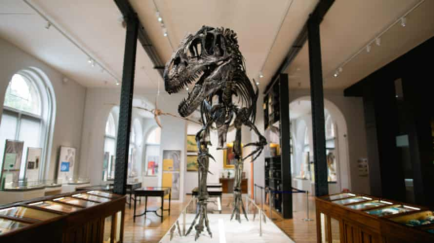 Evolution of Life Gallery at the Lapworth Museum of Geology, University of Birmingham