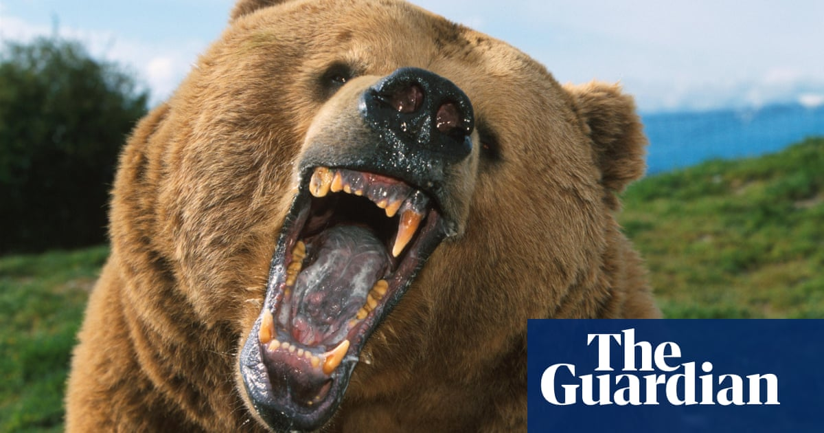 How to survive a bear encounter (and what to do if it all ...