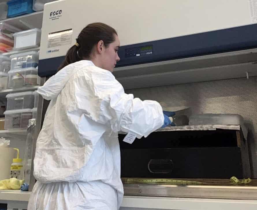Anna Kelly analysing ice core.