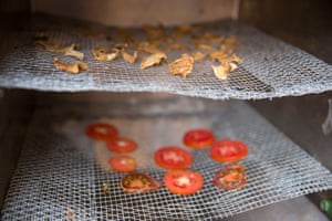 Pumpkin and tomato are left to dehydrate in the Sparky Dryer
