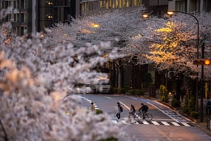 Cherry blossoms have regularly been used in Japanese poetry and literature,. with their fragility seen as a symbol of life, death and rebirth.