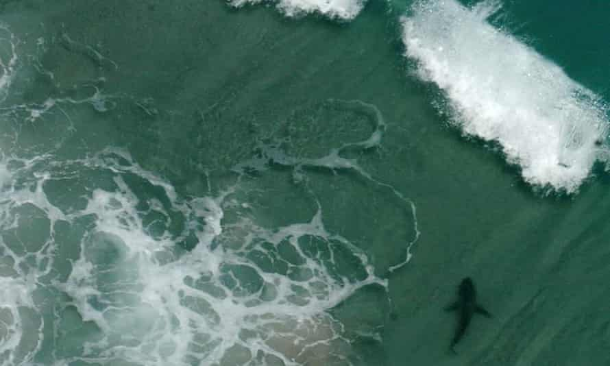 Teenage Boy Bitten By Shark In North Carolina In Sixth Attack In Two Weeks North Carolina The Guardian