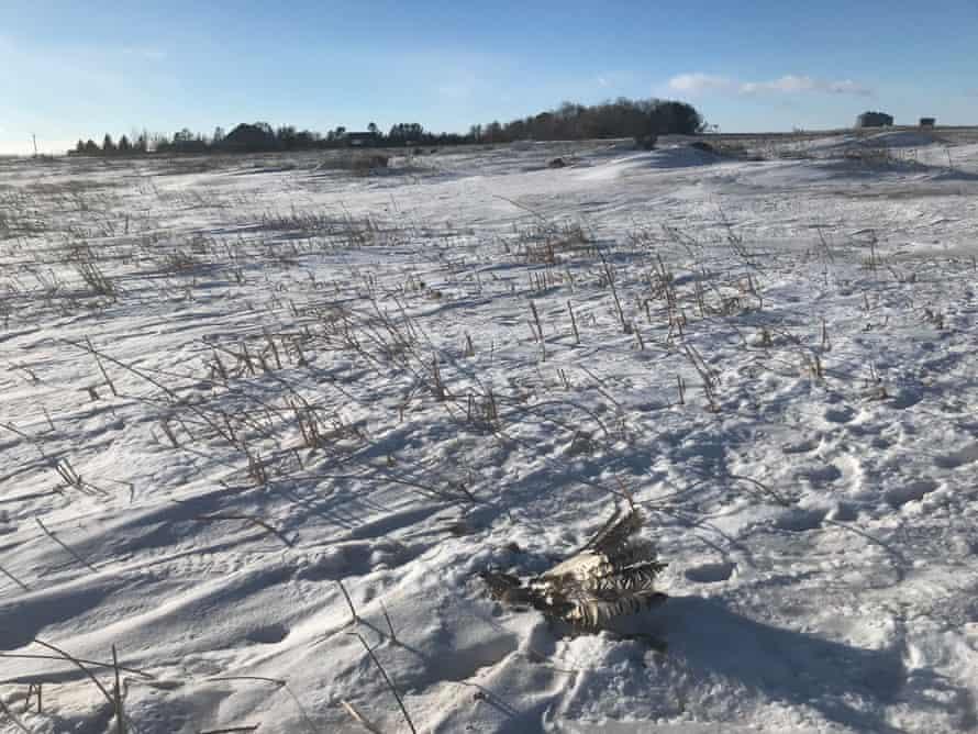 Eagle 1703 found in a field in South Dakota.