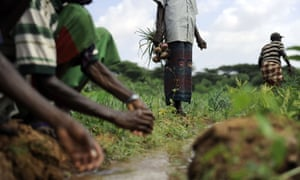 Ethiopia has recently joined AFR100, a country-led effort to bring 100m hectares of land in Africa into restoration by 2030. Now, it is looking to the private sector for help to achieve its goal.