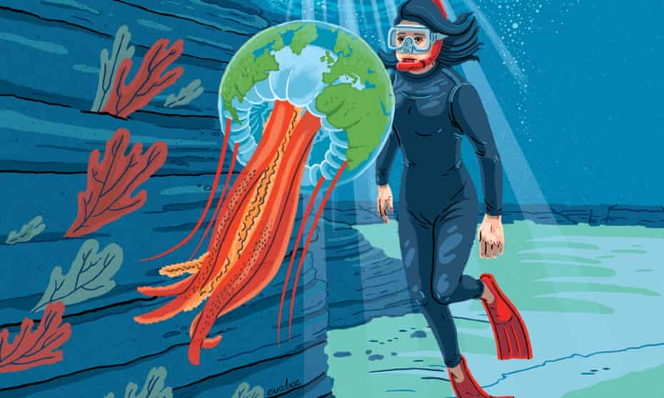 'I was looking for something: I had no idea it was a jellyfish': Juli Berwald. A beautiful picture of a woman and a friendly jellyfish.