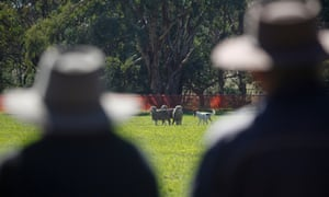 Farmers observe the 2013 National Sheep Dog Trial Championship in Hall near Canberra