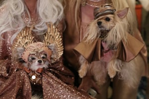 The show is the largest pet fashion and animal rescue benefit in the country