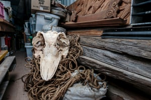 The skull of a Brydes whale, in the storage container at Hihiaua Cultural Centre, Whangārei.