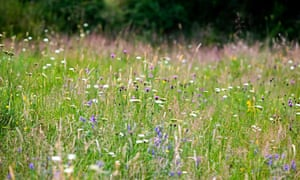 Wild flower meadow areas and seed-rich planting will help boost insects such as bees and butterflies and provide food and nesting areas for birds, the RSPB says.