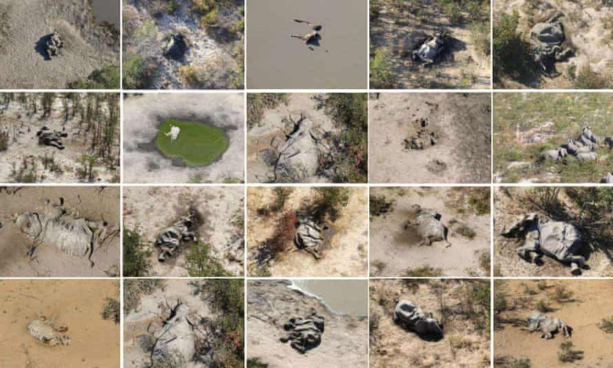 A composite image of some of the dead elephants