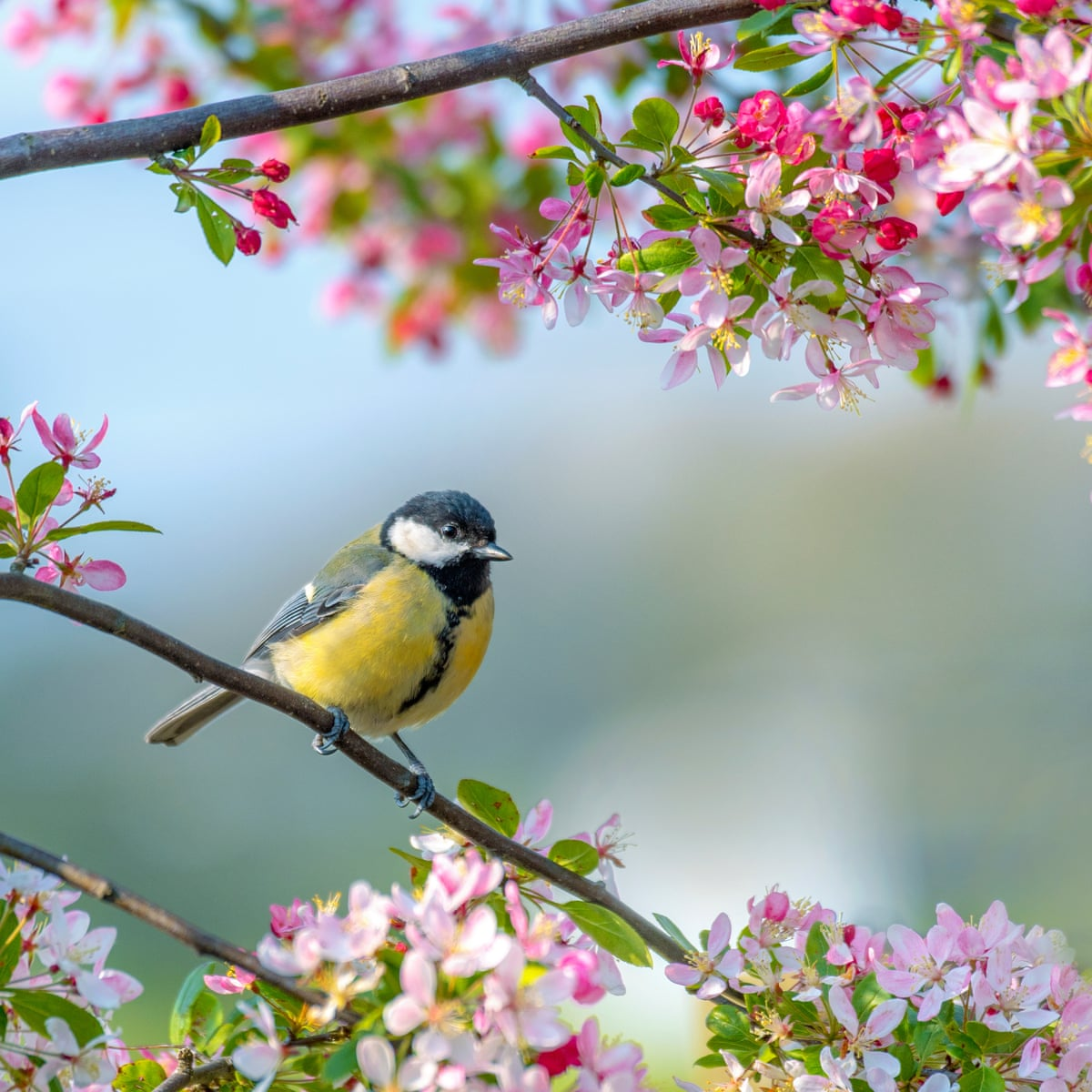 Birds Buds And Bright Days How Spring Can Make Us Healthier And Happier Health Wellbeing The Guardian