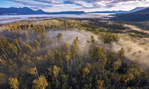 Tasmania forests