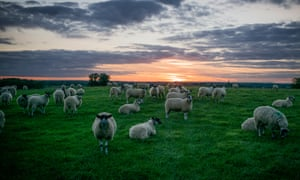 Northamptonshire police have warned sheep farmers to look out for further possible attacks.