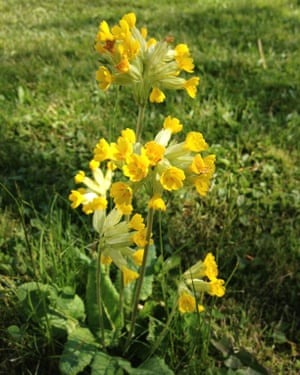 Forget the lawnmower just let your grass grow life and style cowslip mightylinksfo