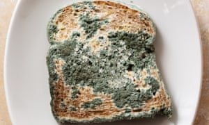 Blue mould covering an old slice of bread.