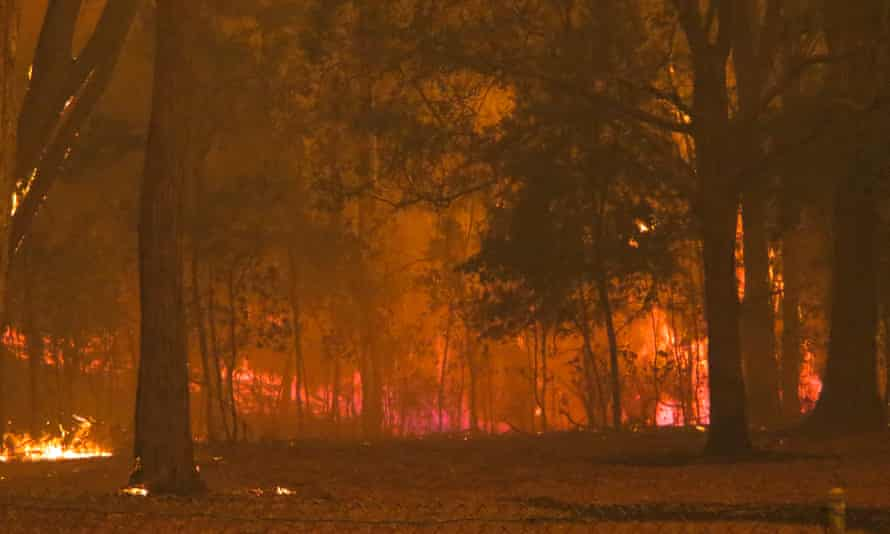 A fire front in Mallacoota in Australia, where tens of millions of wild animals were killed in bushfires.