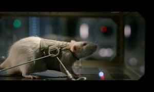 Life rat jake gyllenhaal