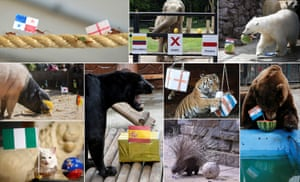 Various animals and insects have had a go at attempting to predict the results of matches