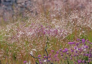 Wavy hair-grass