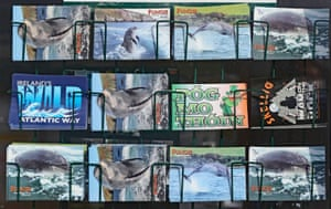 Postcards featuring Fungie the dolphin in Dingle, County Kerry, Ireland, where the creature has gone missing