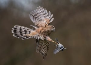 Animal behaviour highly commended (2016): Predator and Prey by Michael Durham, Dumfries